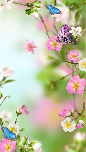Обои цветы на экран