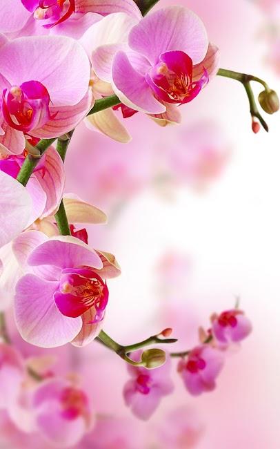 картинка орхидея на андроид скачать